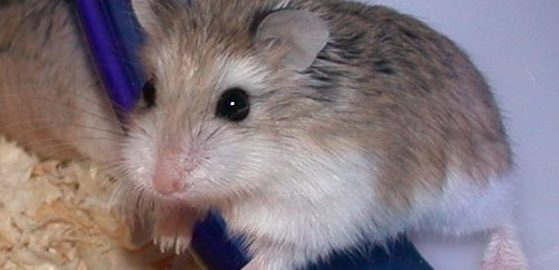 how can i stop my hamster chewing plastic